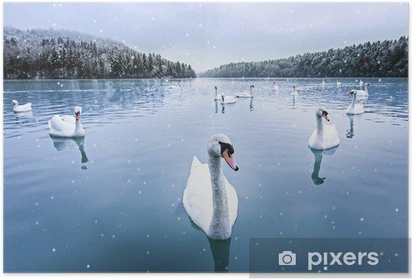 Poster Zwanen zwemmen in het meer op een besneeuwde winterse dag - Zwanen