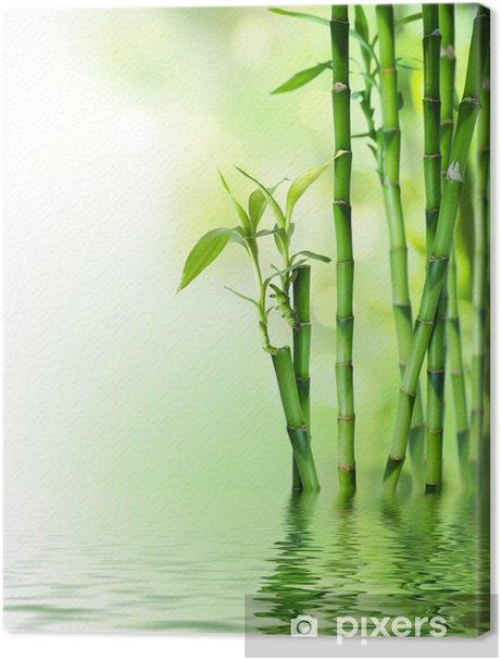 bamboo stalks on water Premium prints - Styles