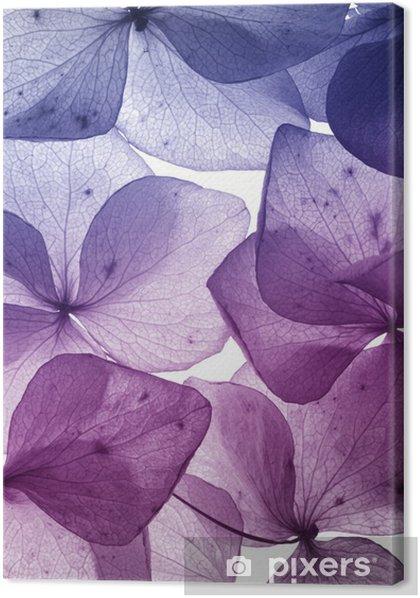colorful flower petal closeup Premium prints - Themes