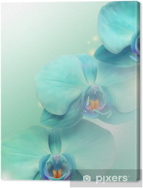 flower Orchid background Premium prints - Themes