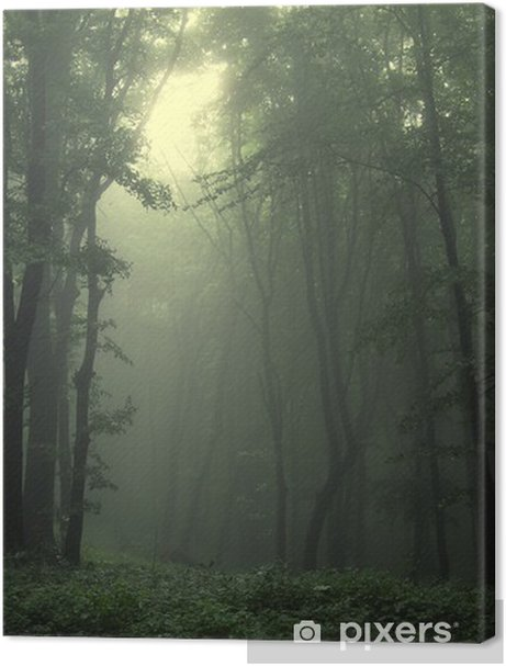 Green forest after rain Premium prints - Styles