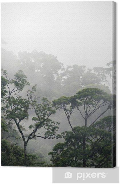 misty jungle forest Premium prints - Landscapes