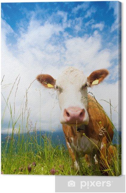 Muzzle of a cow Premium prints - Mammals