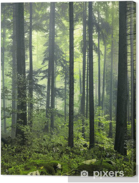 Mysterious dark forest Premium prints - Styles