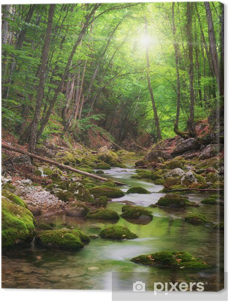 River deep in mountain forest Premium prints - Themes