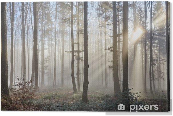 Sun rays through the foggy forest Premium prints - Themes