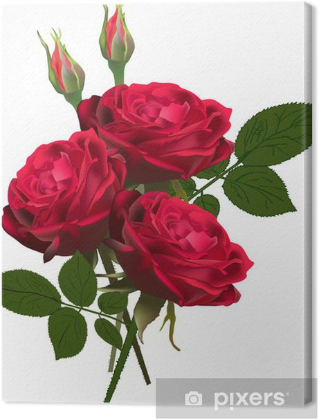 three red roses bunch isolated on white Premium prints - Themes