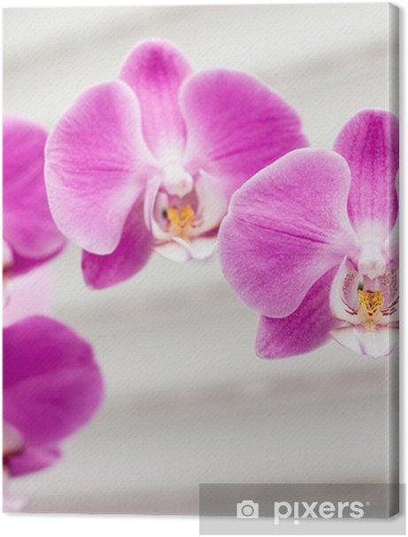 violet orchid flower Premium prints - Themes