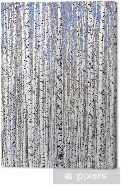 Winter birch forest - winter serenity. Premium prints -