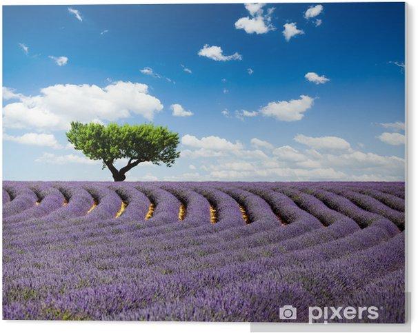 Pvc Bilde Lavande Provence Frankrike Lavendelfelt I Provence Frankrike Pixers Vi Lever For Forandring