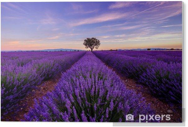 Pvc Bilde Traer I Lavendelfelt Ved Soloppgang I Provence Frankrike Pixers Vi Lever For Forandring