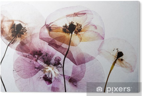 PVC Print Droge klaprozen - Bloemen en Planten