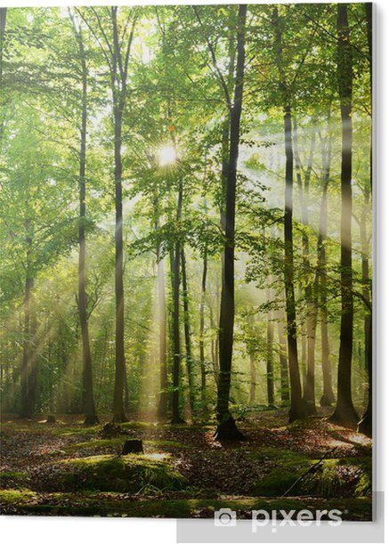PVC Print Forest - Bossen