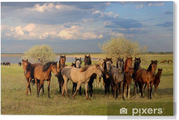 Horses PVC Print - Themes