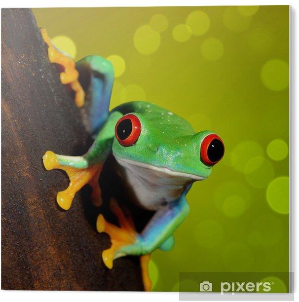red-eye frog Agalychnis callidryas in terrarium PVC Print - Frogs