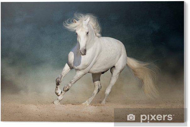 White horse run forward in dust on dark background PVC Print - Animals