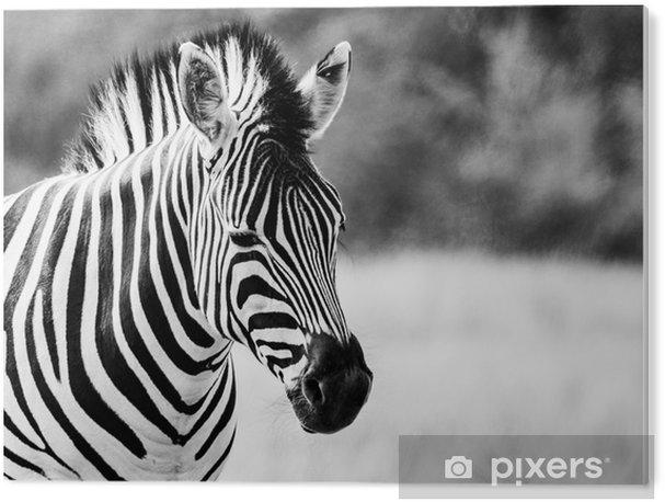 Zebra B&W PVC Print - Animals