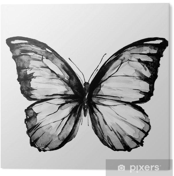 PVC Print Zwarte vlinder, geïsoleerd op een witte - Dieren