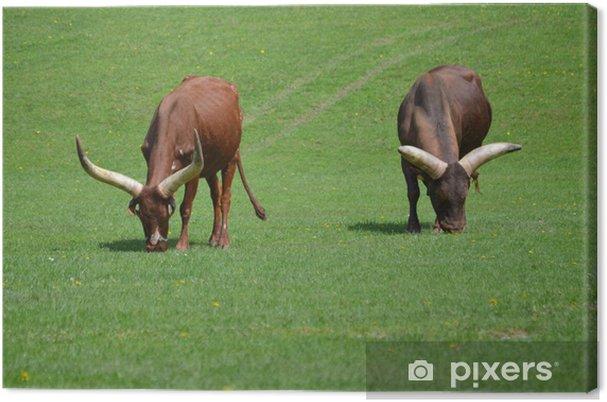 Quadro su tela afrikanisches watussi longhorn rind u2022 pixers