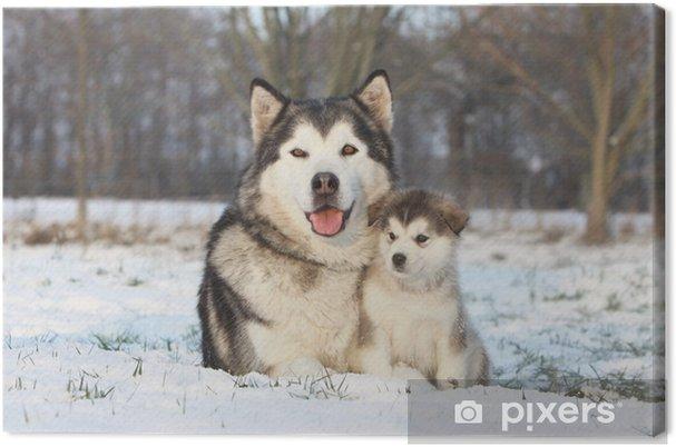 Quadro su Tela Alaskan Malamute et son bébé dans la neige - Cani