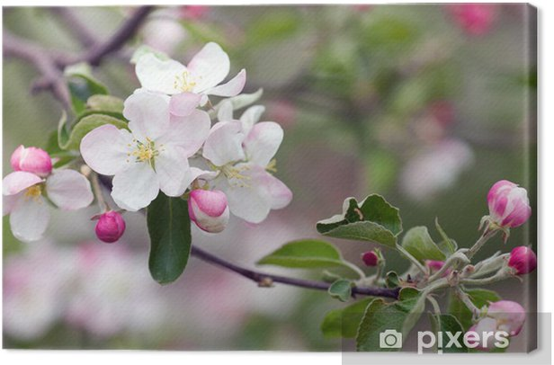 Quadro su Tela Apple blossom - Meli