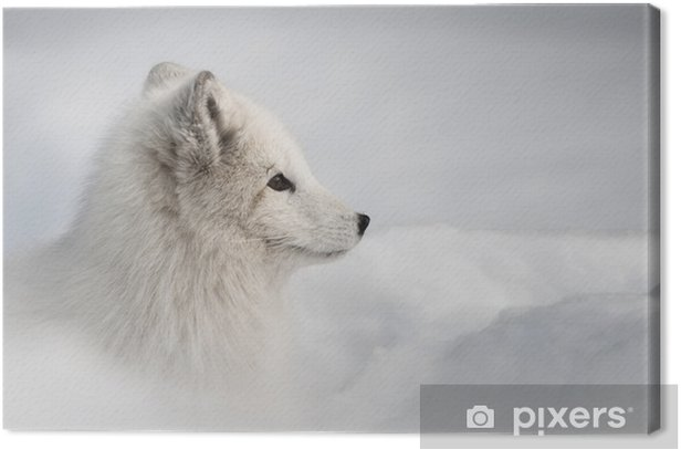 Quadro su Tela Arctic fox - Stili