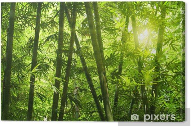 Quadro su Tela Bamb foresta - Temi