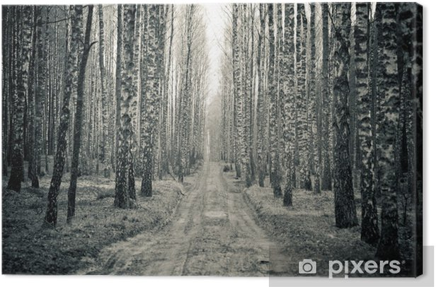Quadro su Tela Betulla in bianco e nero della foresta - Stili