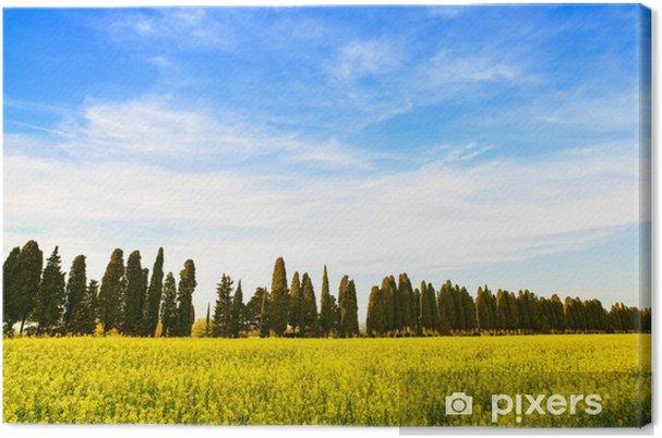 Quadro su Tela Bolgheri famosi cipressi alberi di viale paesaggio ...