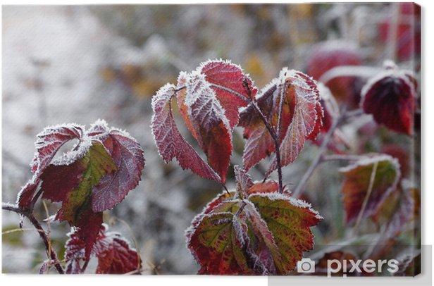Quadro su Tela Brina sulle foglie - Europa