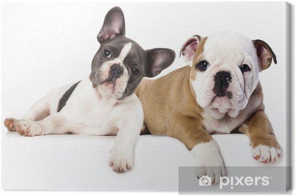 Quadro Su Tela Bulldog Francese E Inglese Bulldog Cucciolo Pixers