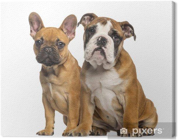 Quadro Su Tela Bulldog Inglese Cucciolo E Bulldog Francese Cuccioli