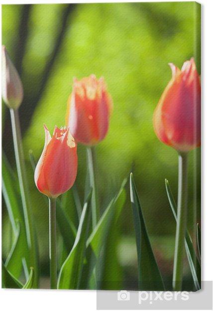 Quadro su Tela Campo di primavera con tulipani colorati • Pixers ...