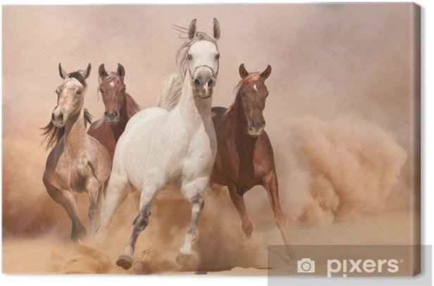 Quadro su Tela Cavalli in polvere - Temi