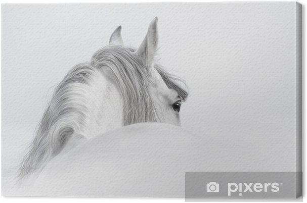 Quadro su Tela Cavallo andaluso in una nebbia - iStaging