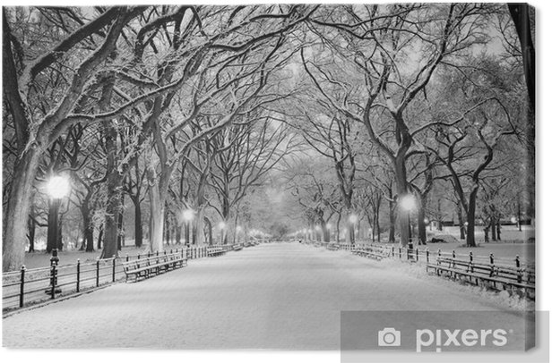 Quadro su Tela Central Park, NY coperto di neve all'alba - Città Americane