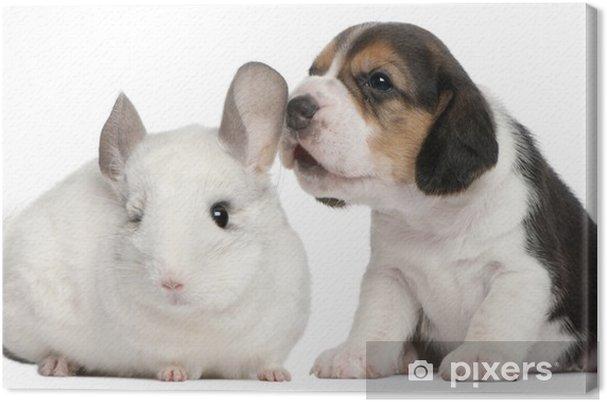 Beagle Nel Le Cuccioli Di Beagle Querciacb