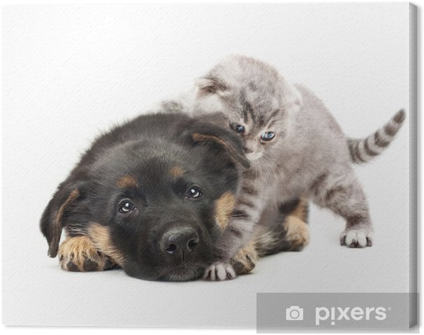 Quadro Su Tela Cucciolo Di Cane Pastore Tedesco E Un Gatto Su Sfondo