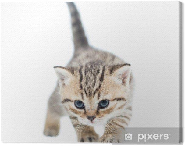 Quadro su Tela Divertente camminare cat kitten - Spazio da decorare