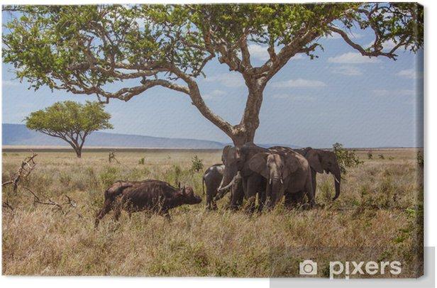 Quadro su Tela Elefanti paesaggio africano sono protetti contro bufali - Temi