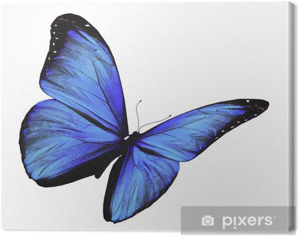 Quadro Su Tela Farfalla Blu Volare Isolato Su Sfondo Bianco