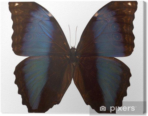 Quadro Su Tela Farfalla Nera E Blu Isolato Su Sfondo Bianco Pixers
