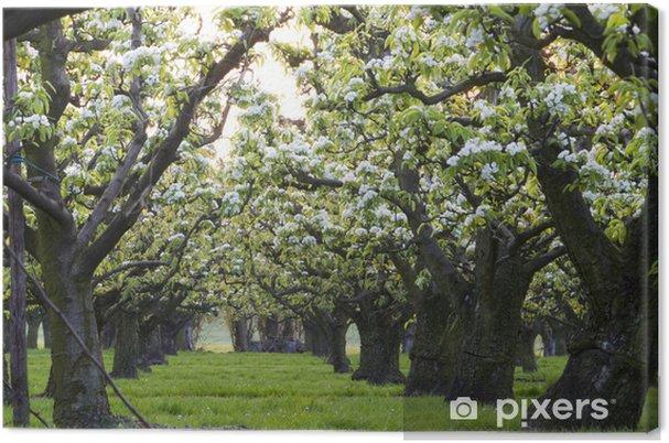 c42bc8234535 Quadro su Tela Fila di alberi di mele • Pixers® - Viviamo per il ...