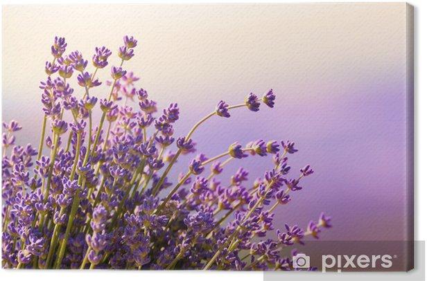 Quadro su Tela Fiori di lavanda fioriscono periodo estivo - Erbe