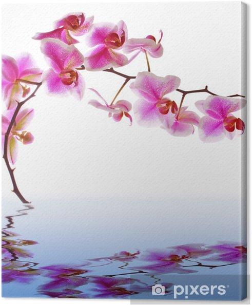 Quadro Su Tela Fiori Rosa Orchidea Su Uno Sfondo Bianco E Acqua Di