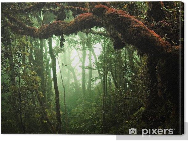Quadro su Tela Foresta pluviale tropicale - Temi