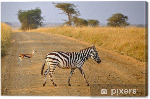 Quadro su tela giovane zebra incrocio strada con antelope su safari
