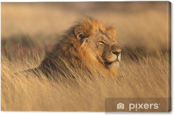 Quadro su Tela Grande leone maschio - Temi