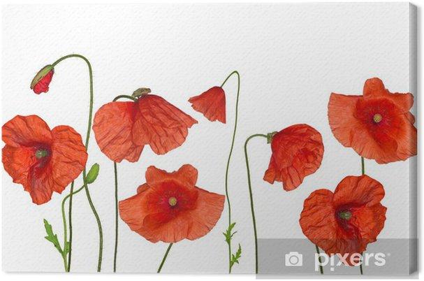 Quadro su tela groop di selvatici fiori di papaveri rossi for Quadri con papaveri rossi