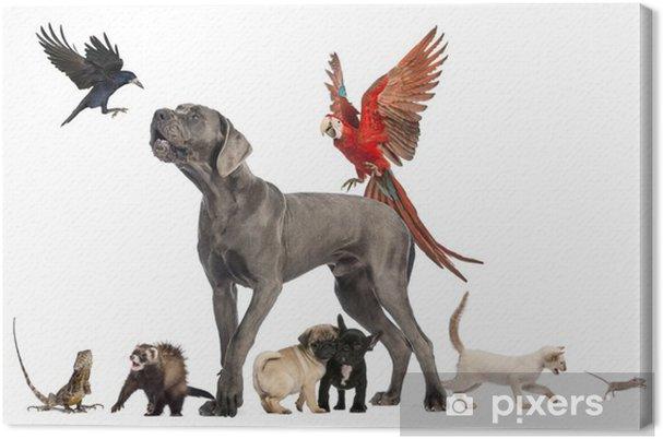 Quadro Su Tela Gruppo Di Animali Gruppo Di Animali Domestici Cane